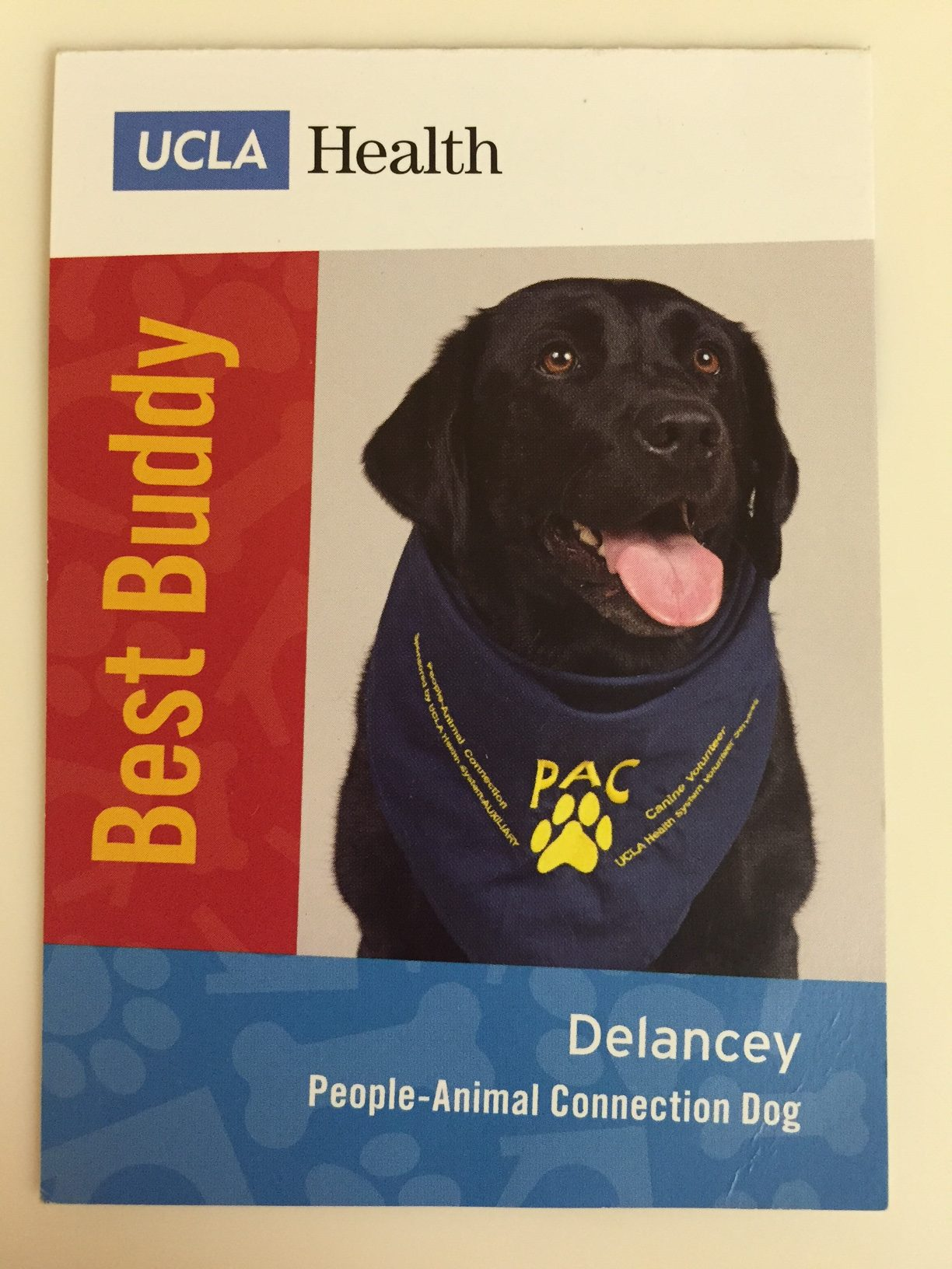 Delancey Best Buddy