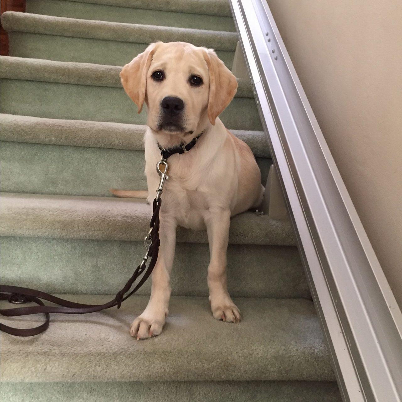 Velma at 13 weeks on stairs