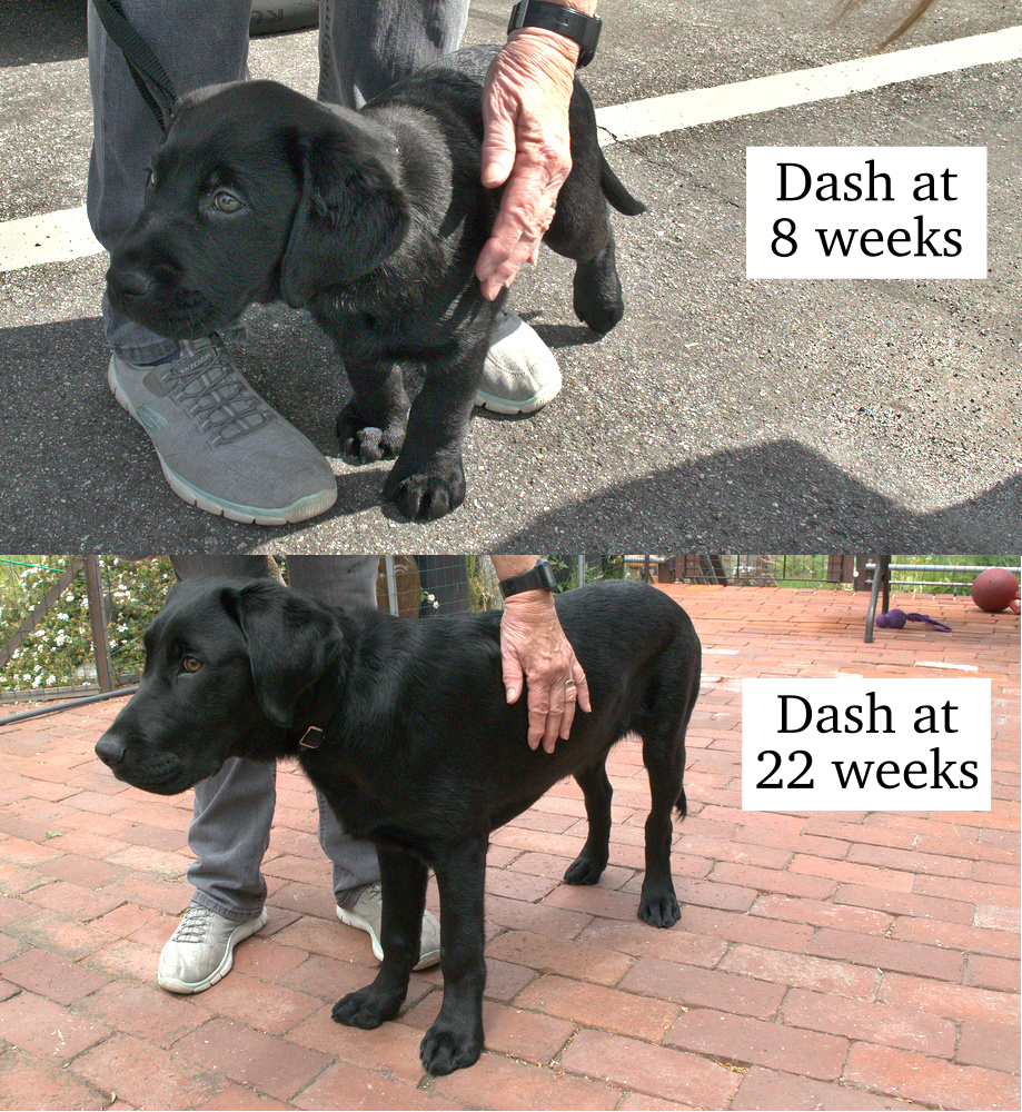 Dash at 8 and 22 weeks comparison