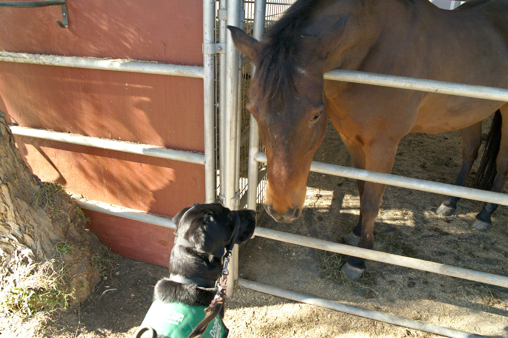 Dash getting it straight from the horse's mouth