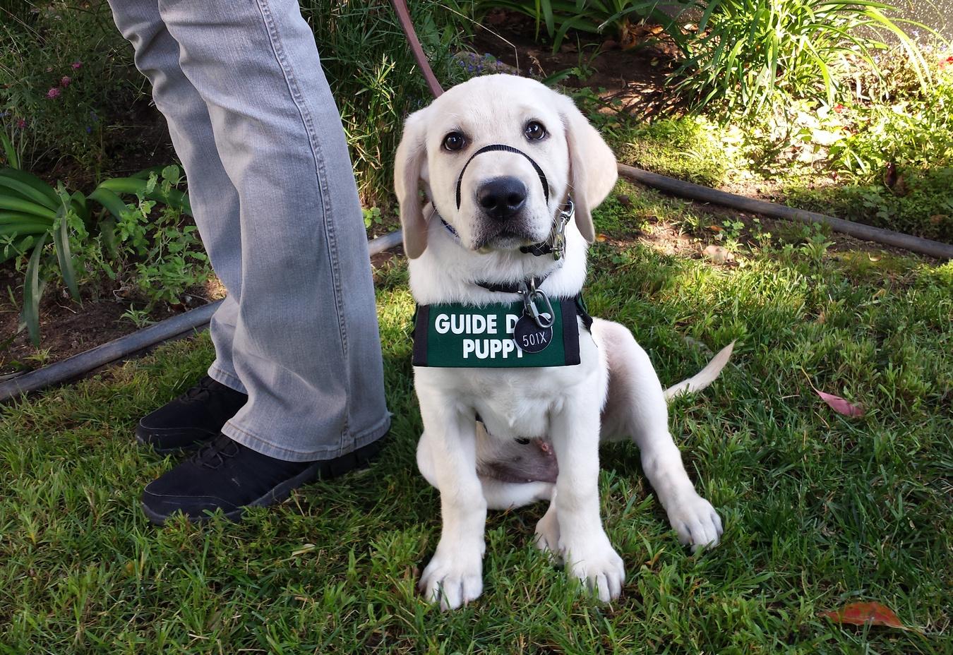 Milo at a pup social 2017-07-17