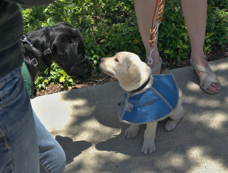 Milo meets Dash