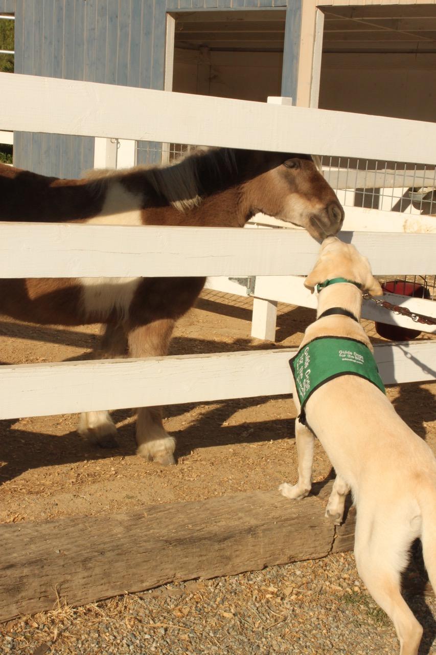 Milo and pony