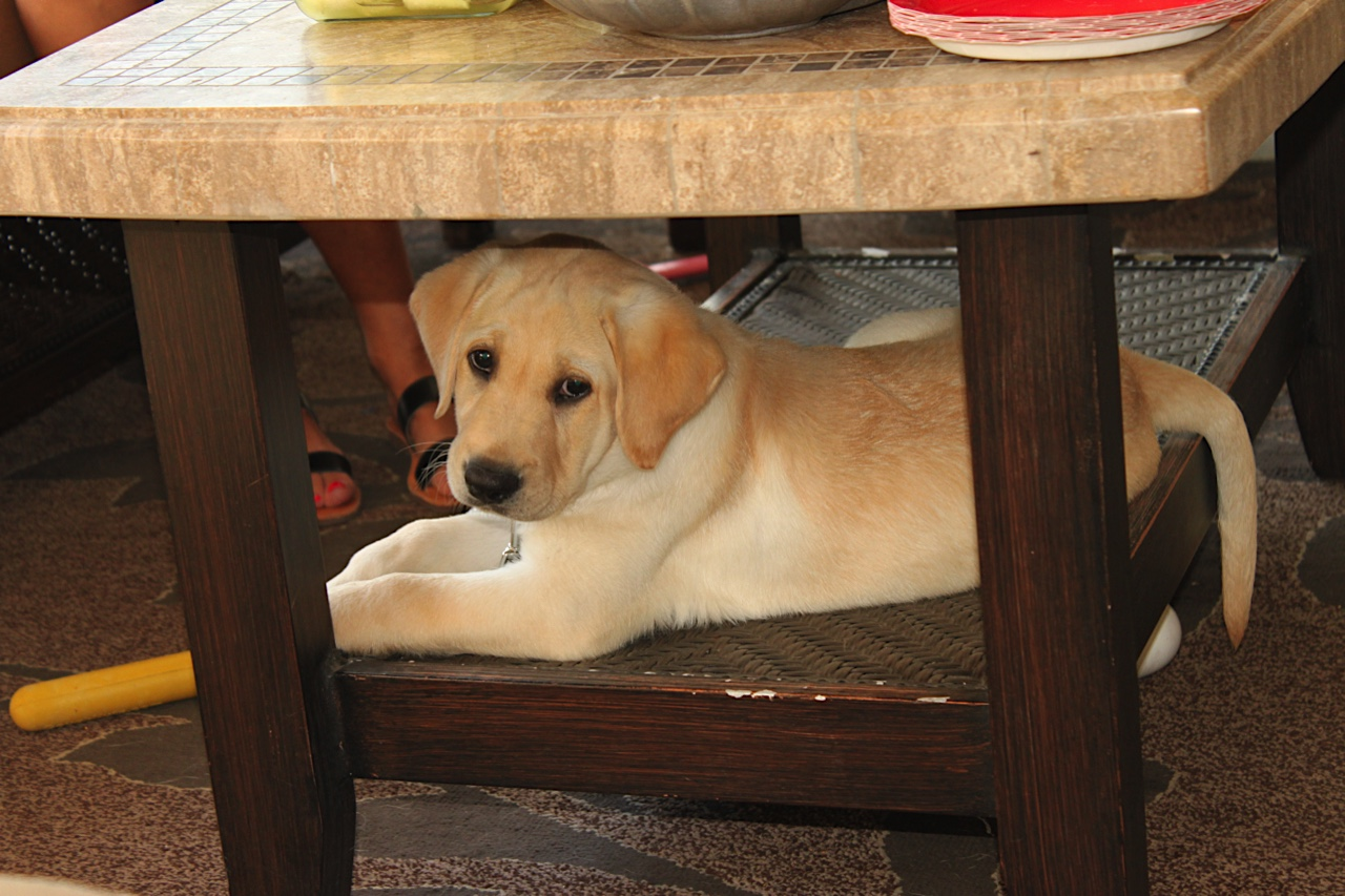 Dover under table