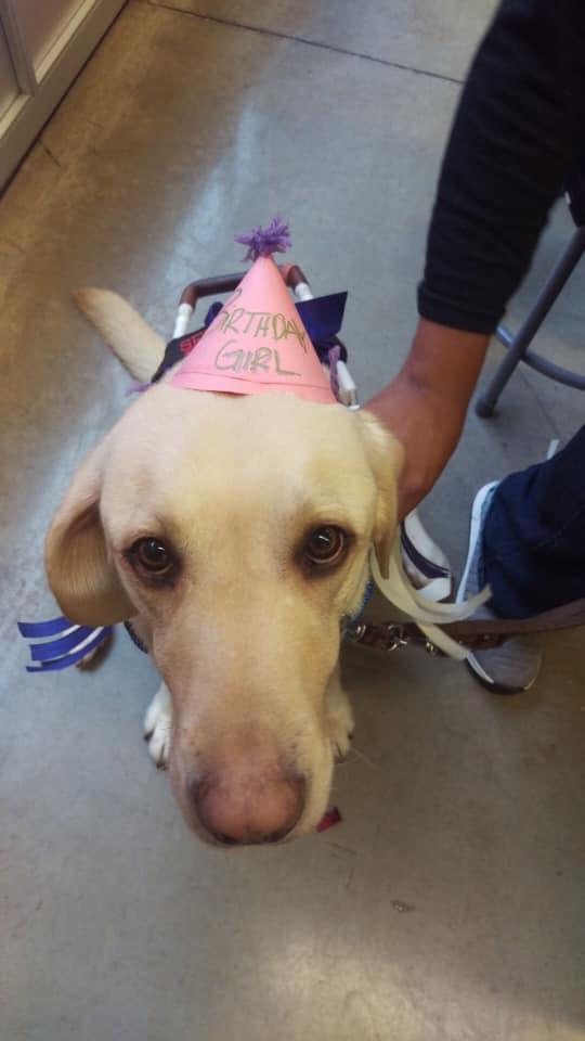 Dreamer's 4th birthday