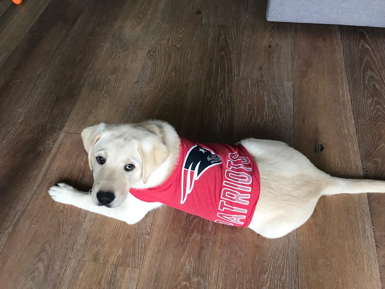 Kazuki, Patriots fan