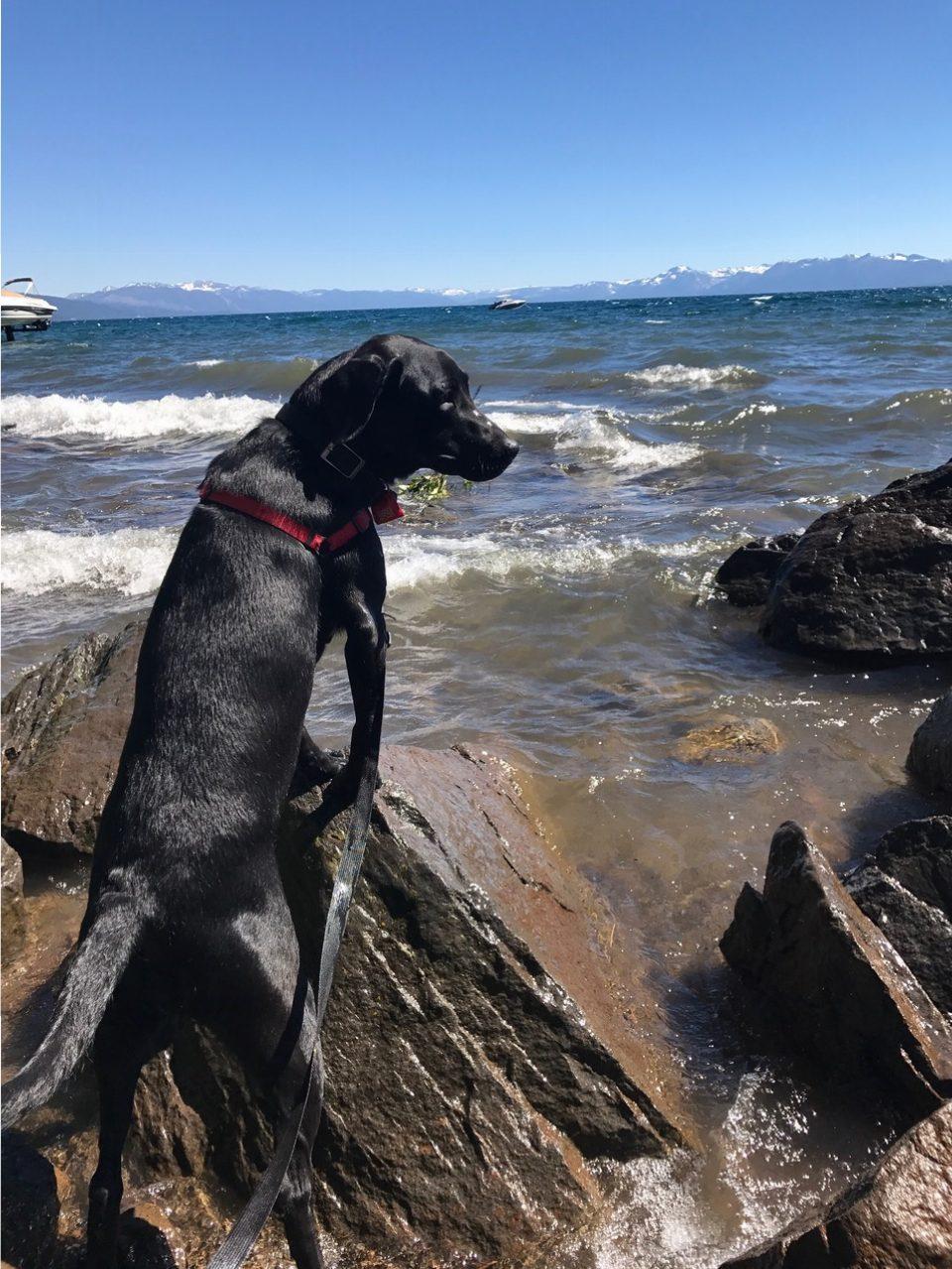 Reese On Rocks