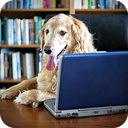 Career Change Dogs