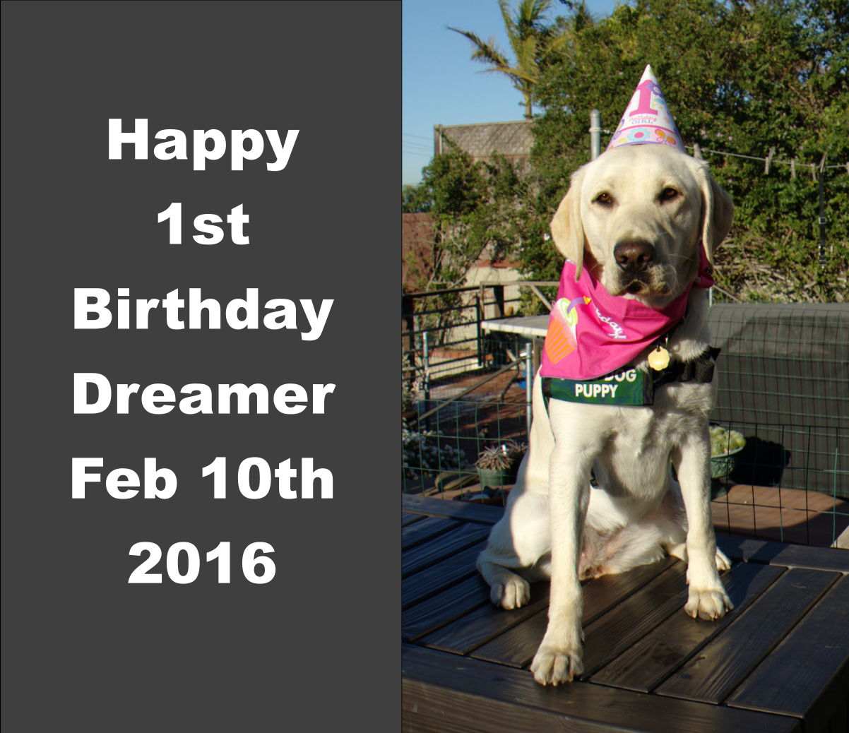 Dreamer 1st birthday