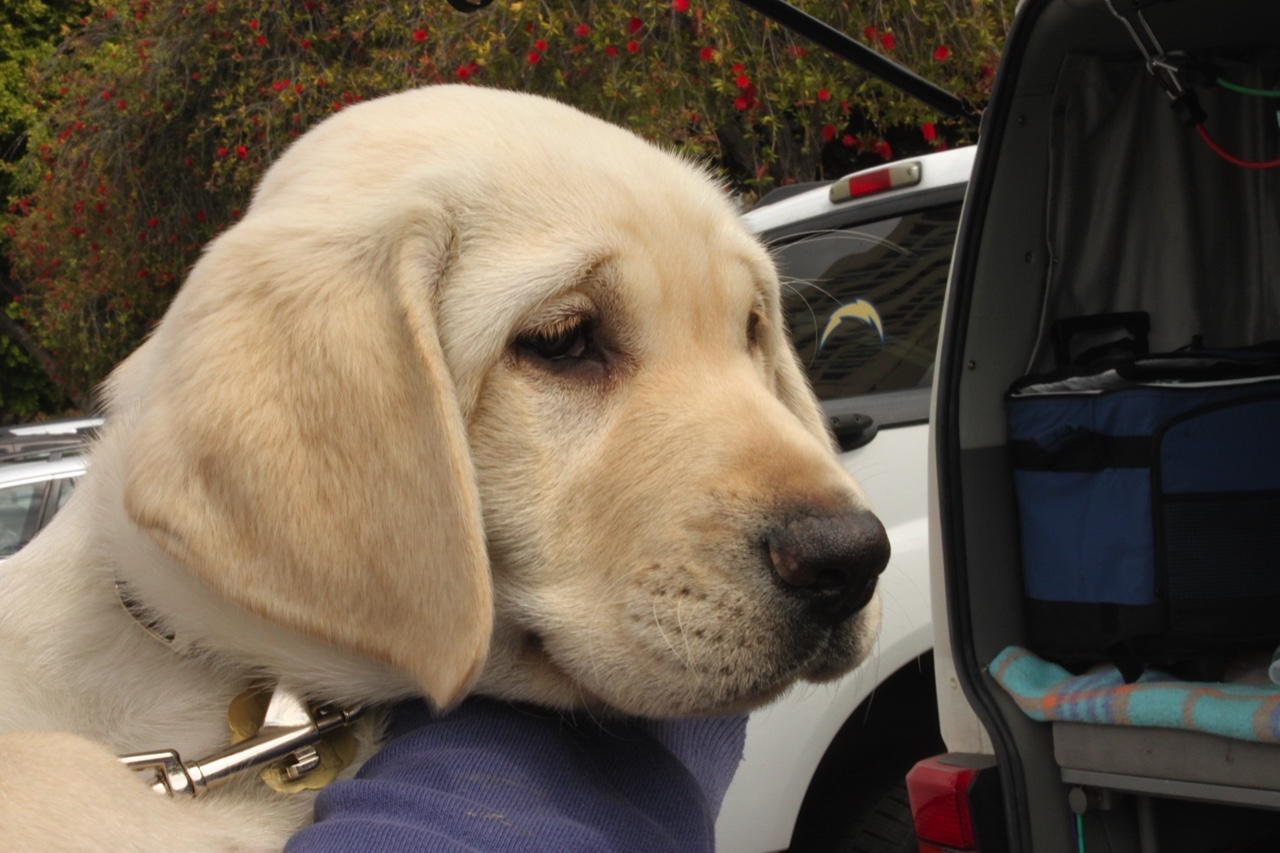Dreamer at the Puppy Truck