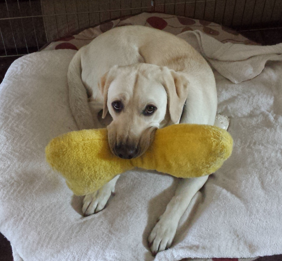 Dreamer with bone pillow