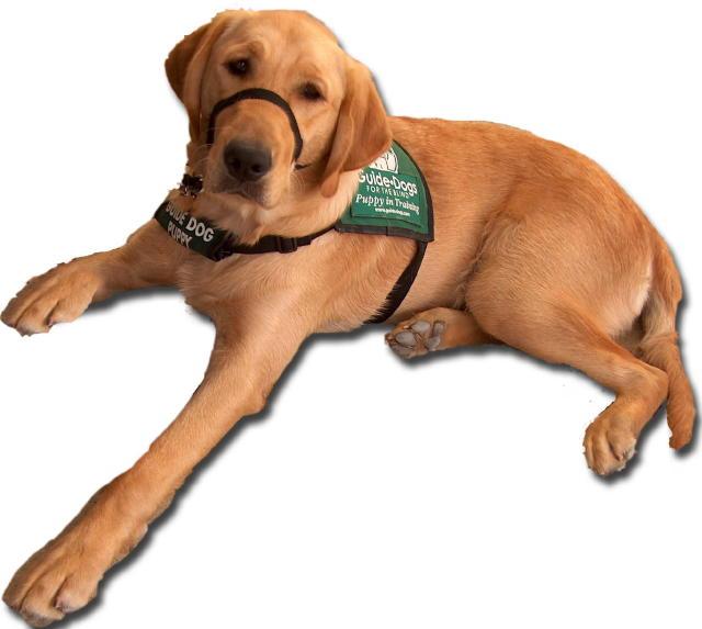 Hugo Puppy
