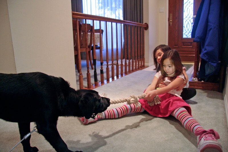 Dog And Girls Tug