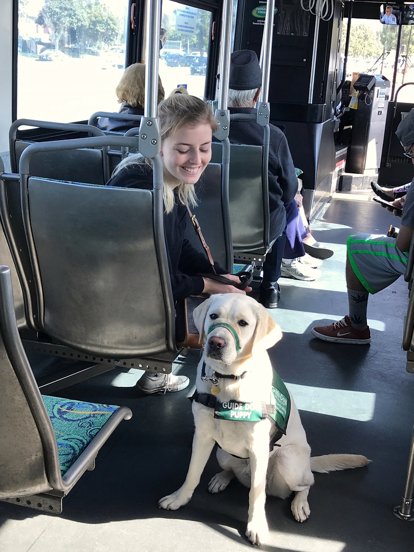 Katherine with Zola on a bus