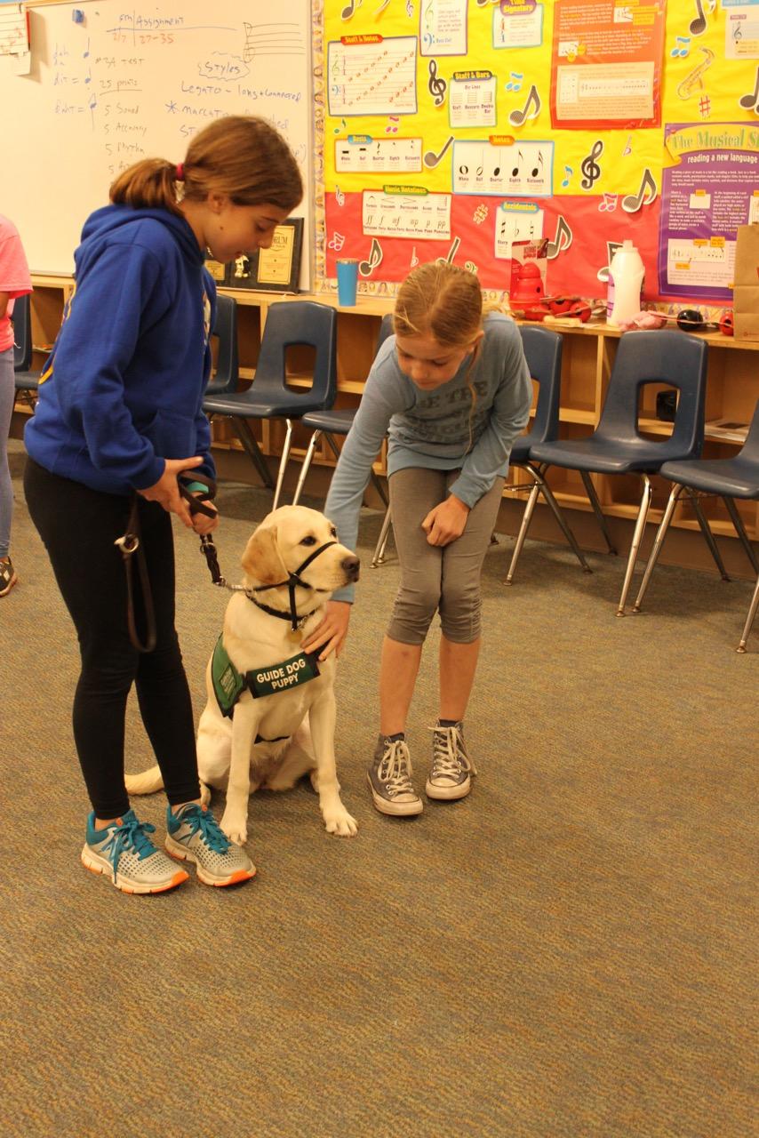 Presentation: May I pet your dog