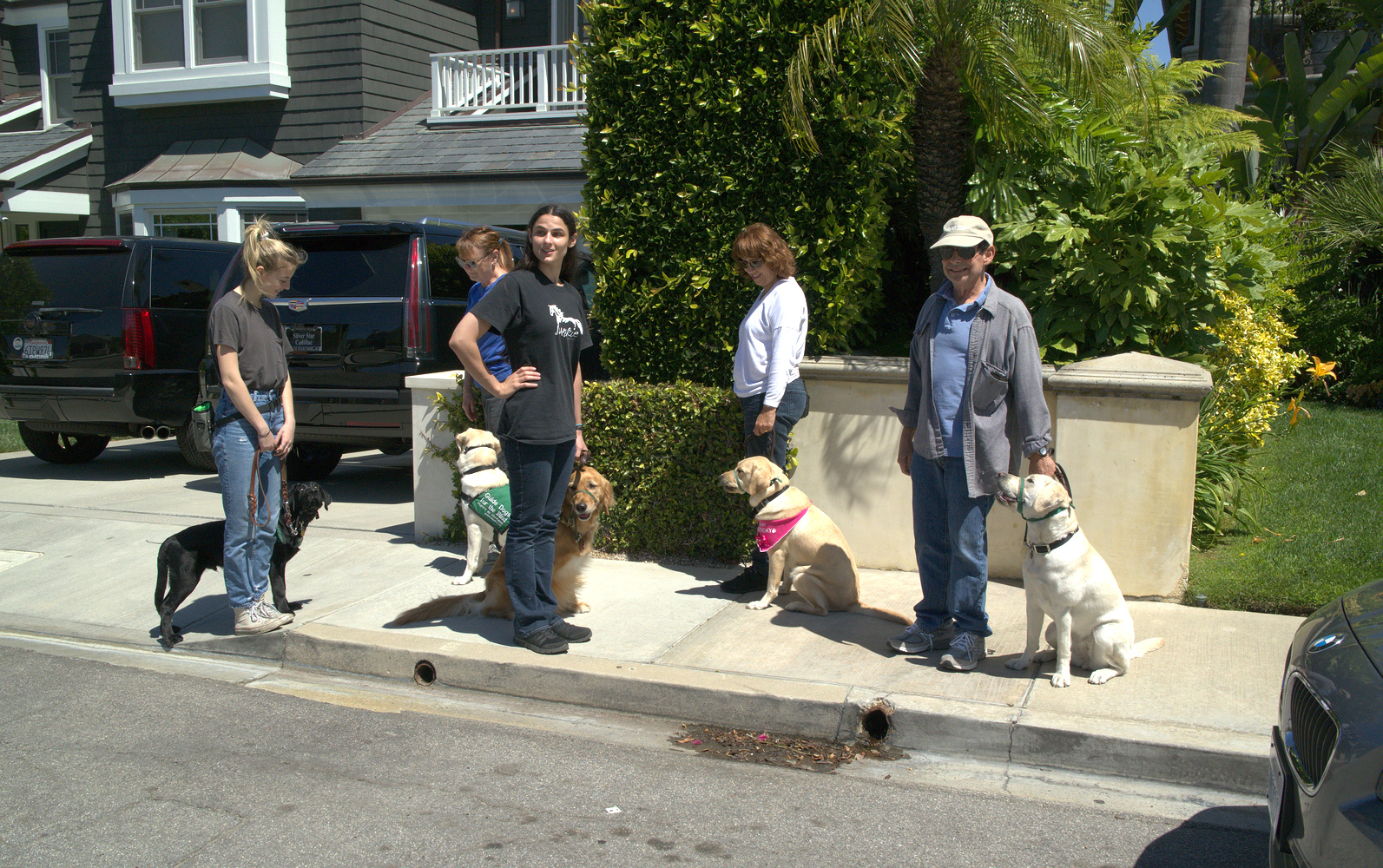 Training: Dog Distractions, 2017-05-14