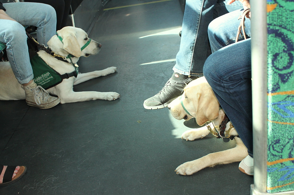 Training: positioning on a bus, 2017-05-16
