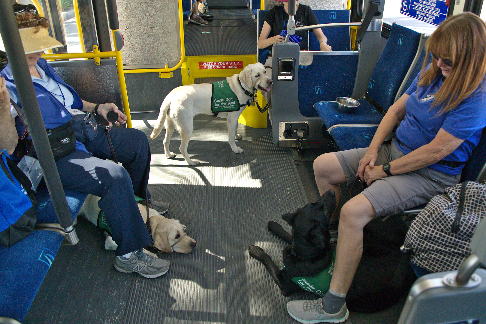Dogs behaving well on a bus