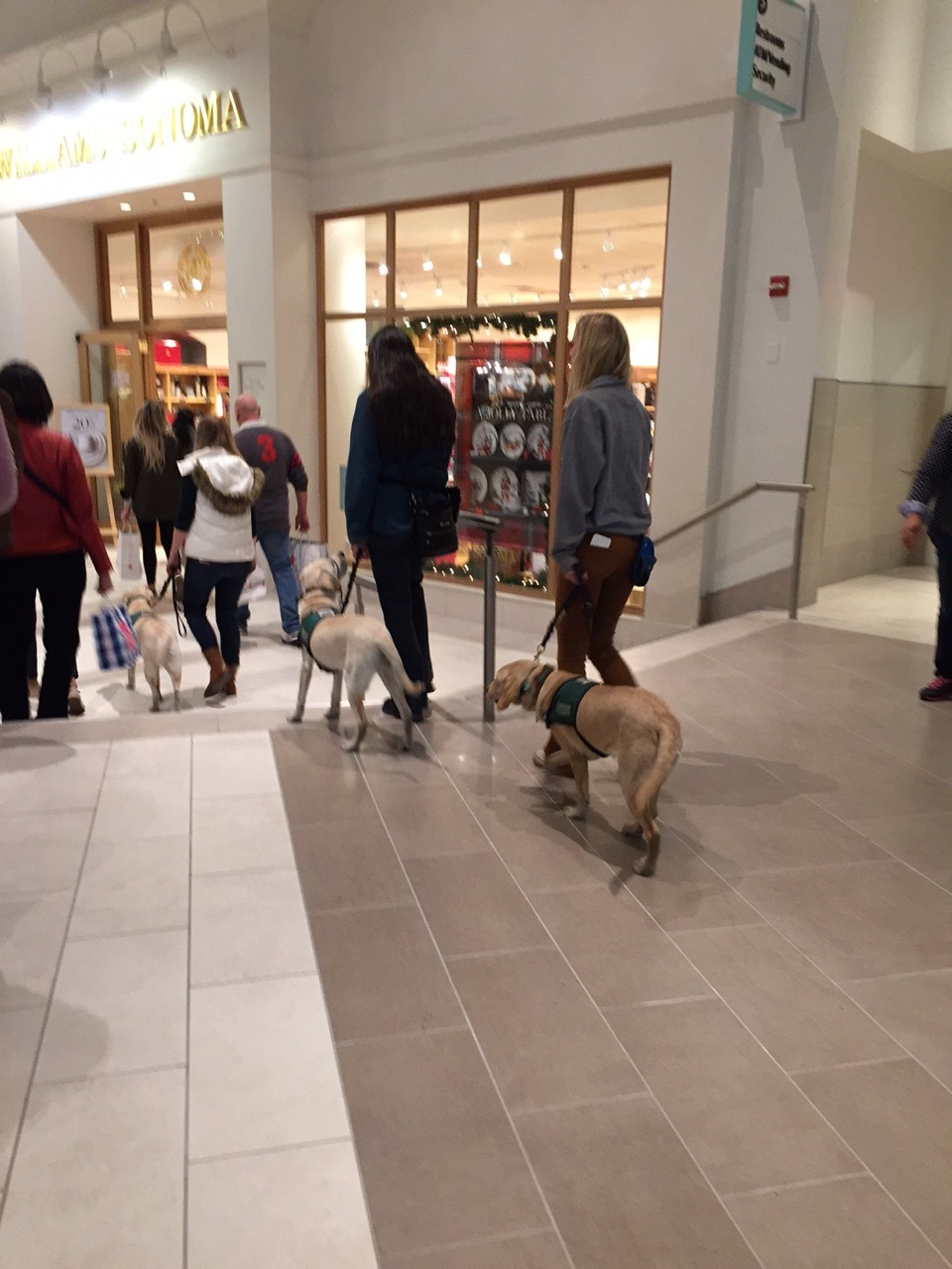 Training, walking in a mall 2016
