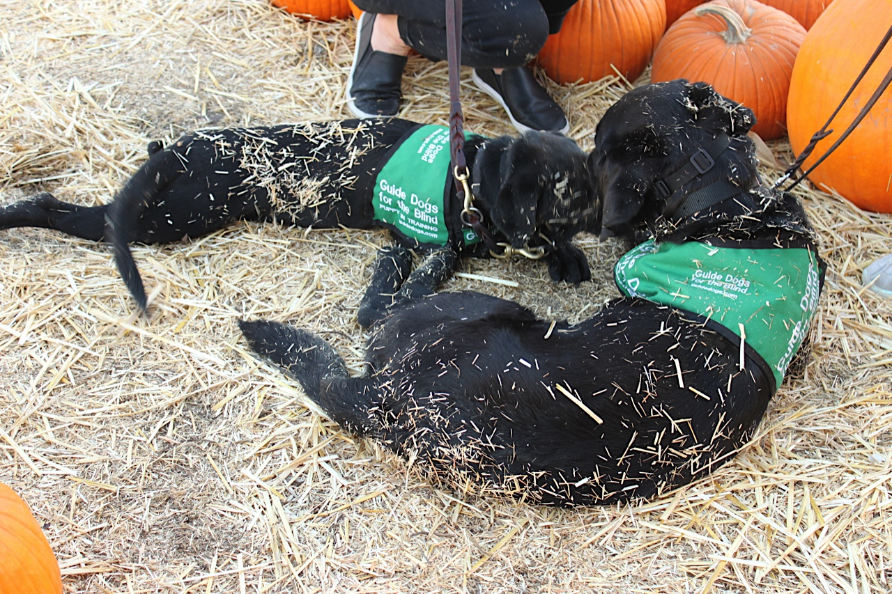 Jess and Dash at the Pumpkin Patch