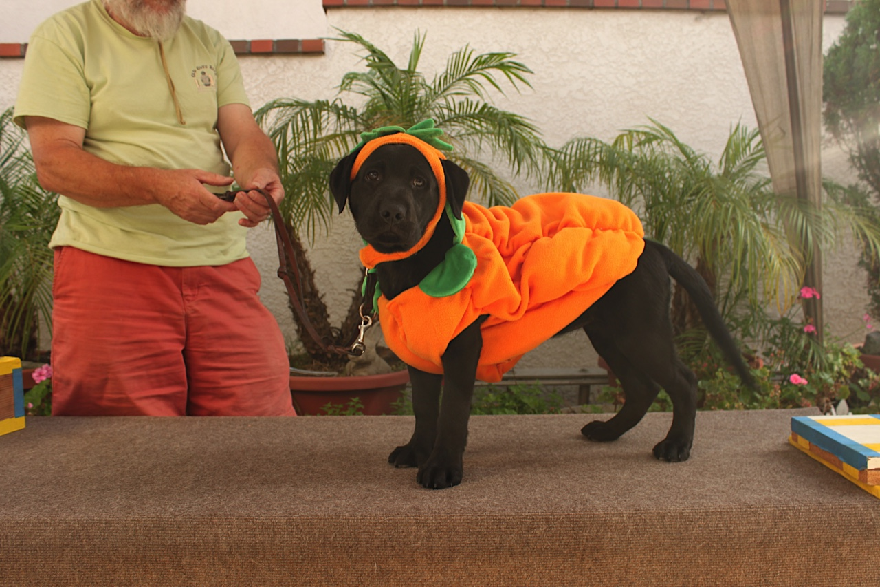Jess the pumpkin - this is embarrassing!