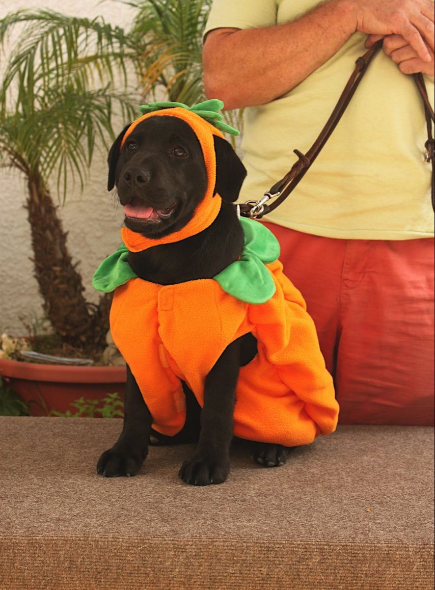 Jess the pumpkin - the things I do for humans!