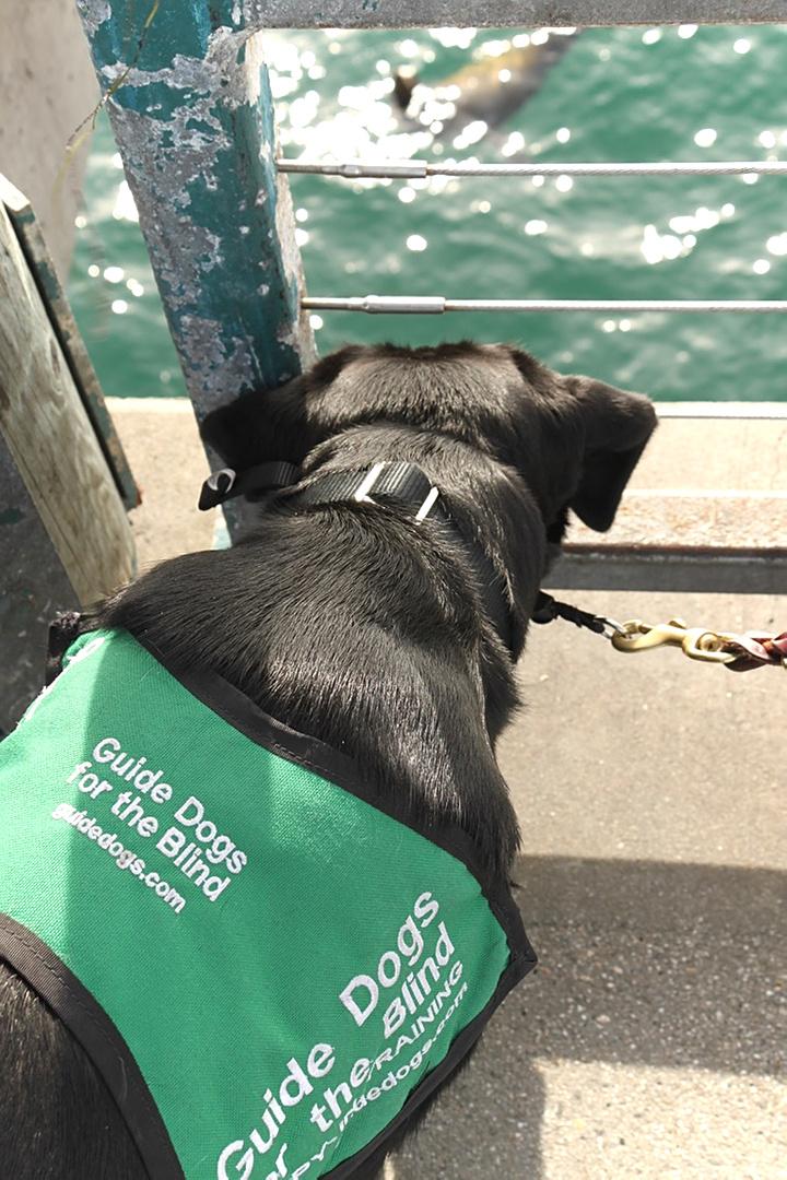 Jess watching a seal