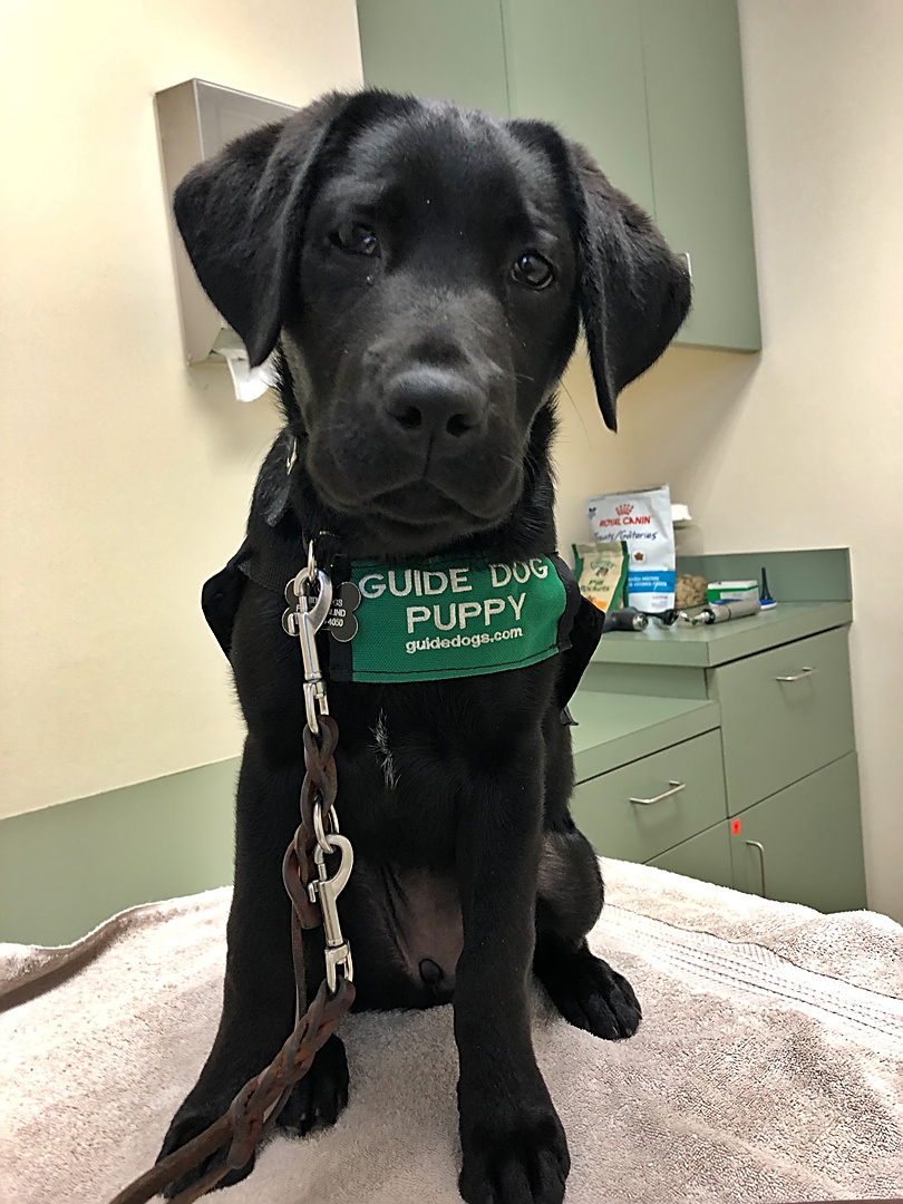 Crescent vet visit