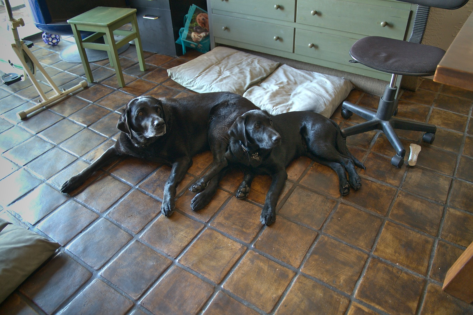 Calypso and Macklin (wanabee big dog)