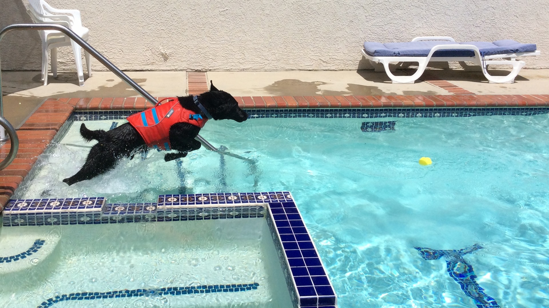 Macklin jumping into the pool