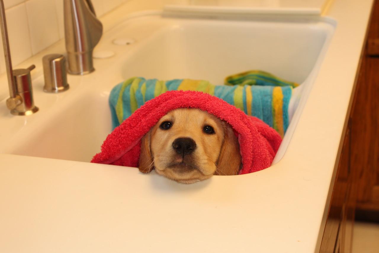 Mesa's first bath