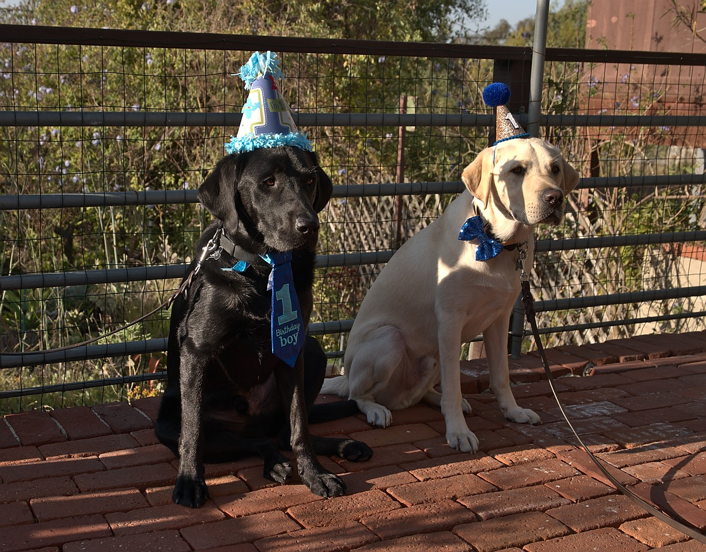 Macklin and Kazuki 1st Birthday