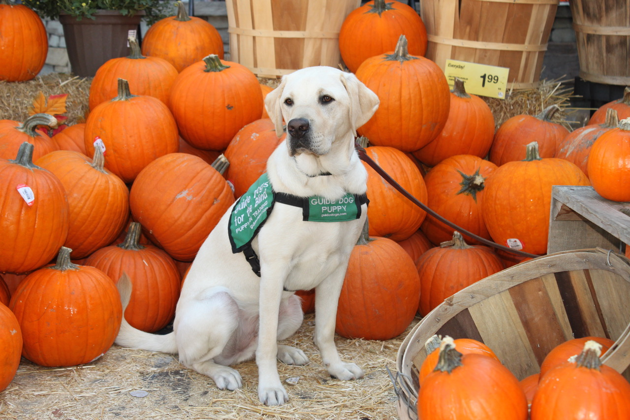 Kazuki at the Pumpkin Patch