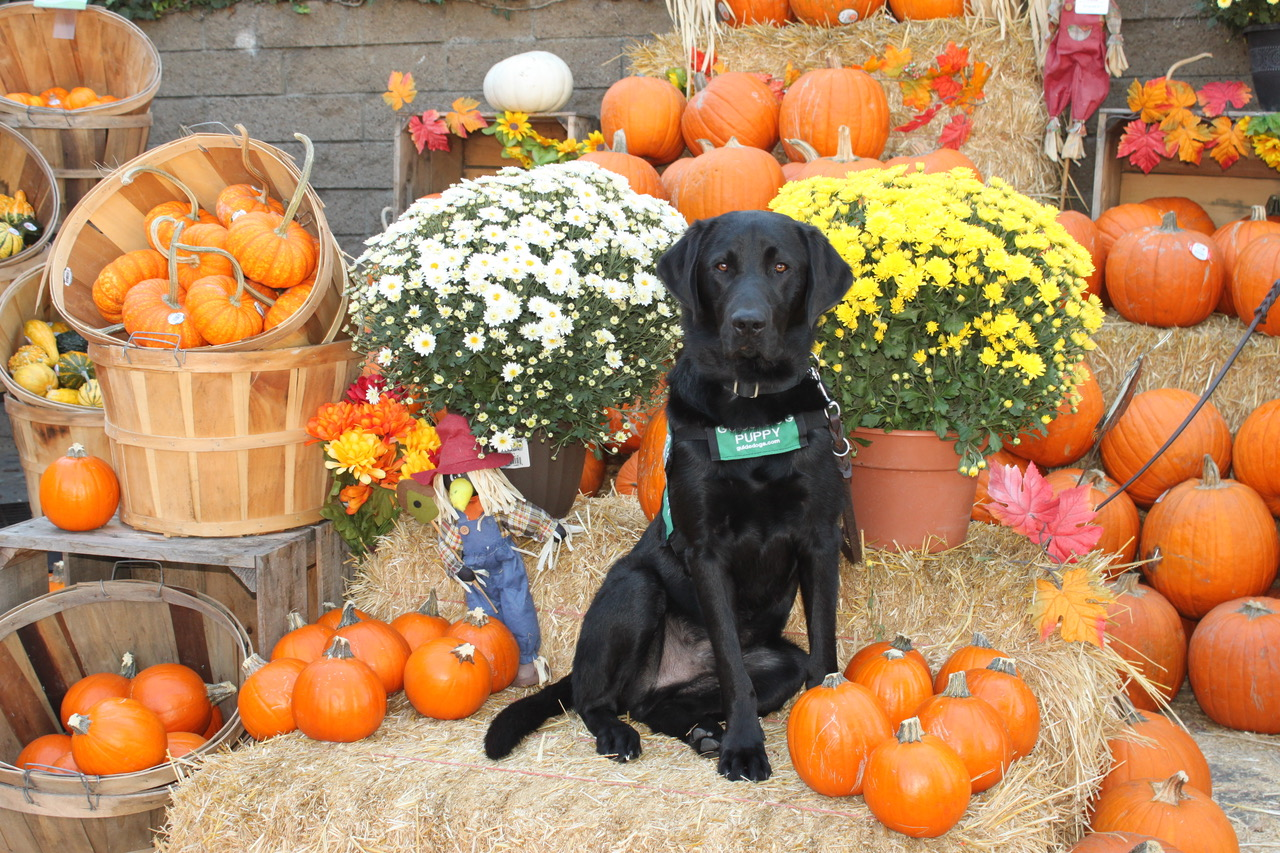 Macklin at the Pumpkin Patch