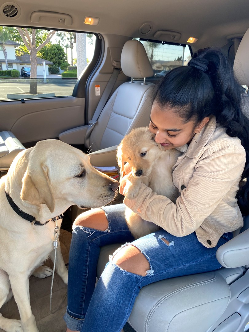Avanthi with Puff and Kazuki at the puppy truck