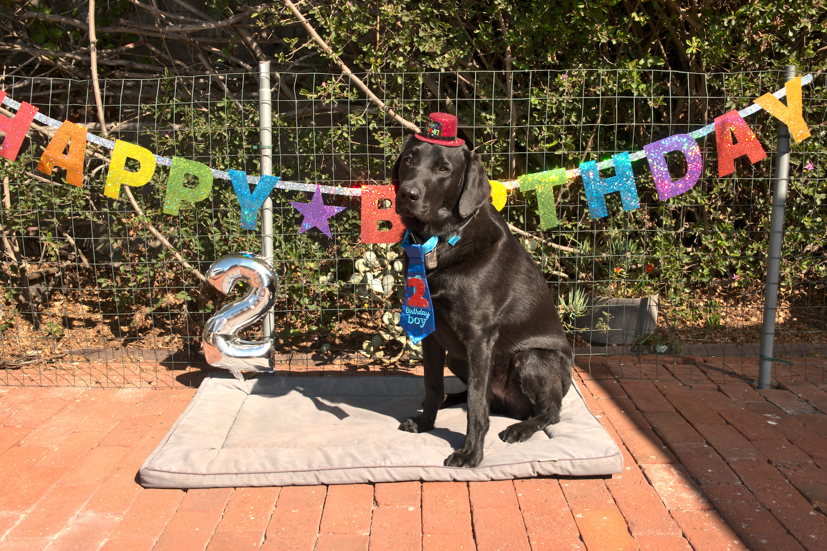 Macklin's 2nd Birthday