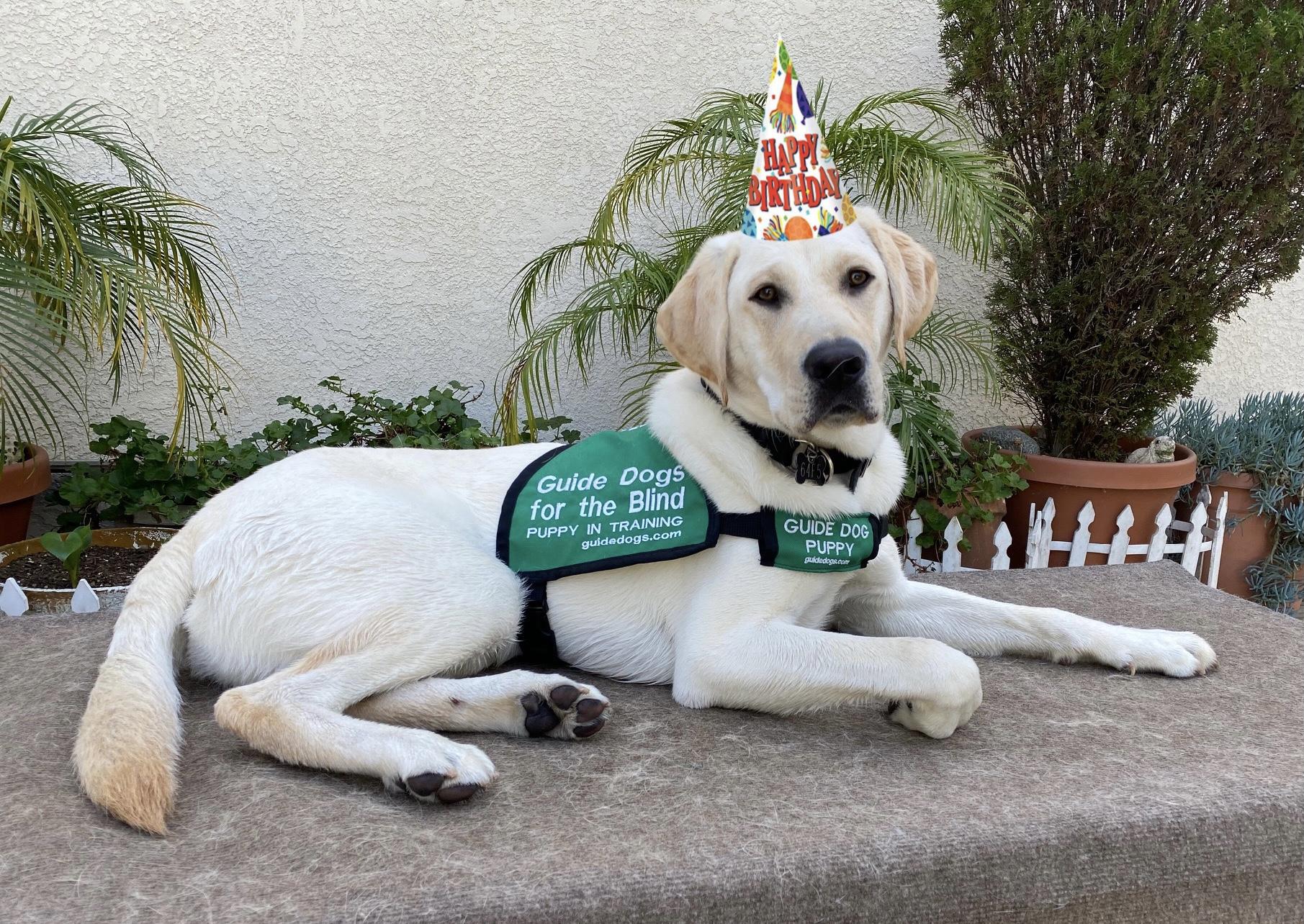 Wendell's first birthday